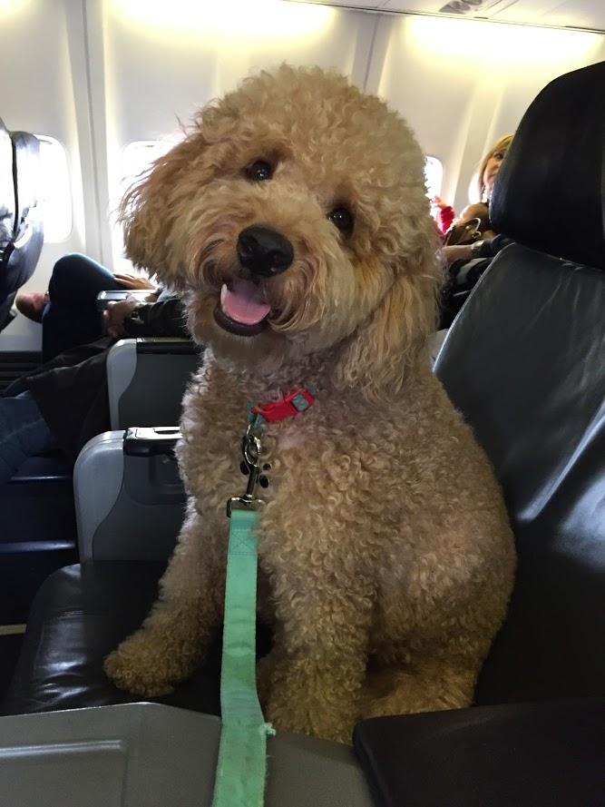 Deakyn's First Flight